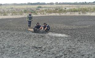 Une unité spécialisée d'intervention animalière s'est aussi rendue sur les lieux.