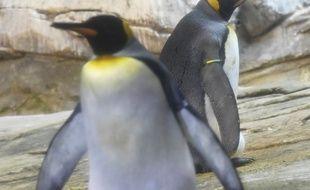 Le zoo de Berlin est visiblement friendly.