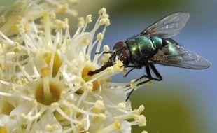 L'oeil à facettes des mouches, des abeilles ou des libellules inspire les chercheurs pour créer de légers robots volants ou mettre au point des bandes dotées de capteurs pouvant détecter les obstacles et alerter des aveugles d'un dange