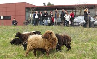 Les moutons sont arrivés mardi après-midi.