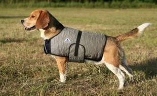 Ce manteau rafraîchit le chien en cas de forte chaleur.