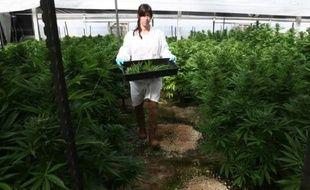 Israël encourage depuis une dizaine d'années l'utilisation du cannabis à des fins thérapeutiques.