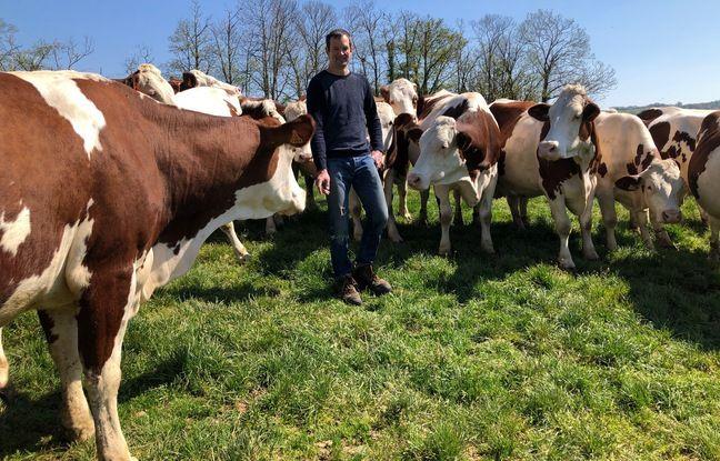 Le producteur fermier Vincent Bernard, ici au milieu de ses 100 vaches, le 3 mai à Plan (Isère).
