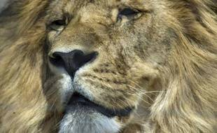 Un lion, le 17 octobre 2015, à Bethlehem, en Afrique du Sud