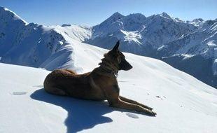 Hiss, le chien du PGHM des Alpes-Maritimes, est décédé après un accident grave.