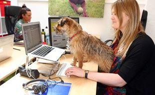 Le chien, meilleur hami de l'homme... même au travail?