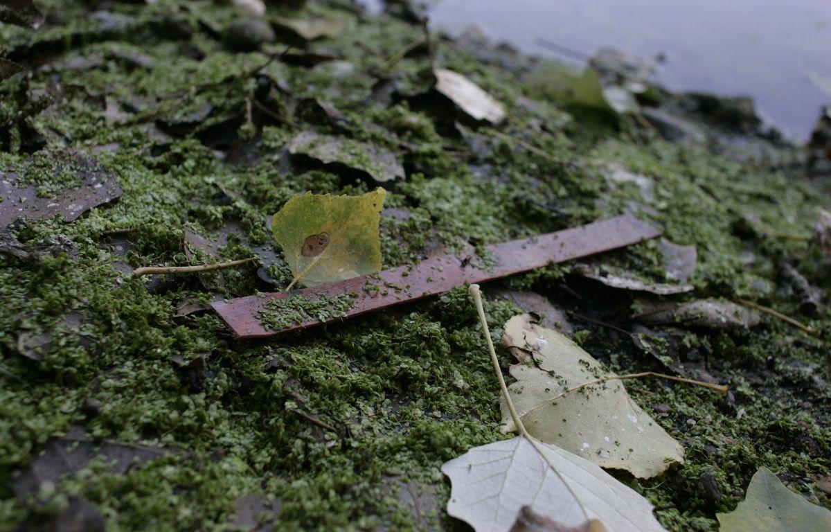 Une bandelette de nitrocellulose sur le site des ballastières de Braqueville. Archives – FrŽdŽric Scheiber/20MINUTES