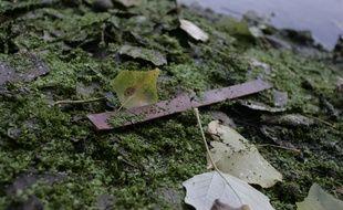 Une bandelette de nitrocellulose sur le site des ballastières de Braqueville. Archives