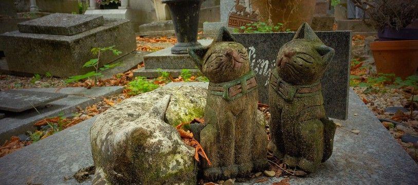 Le cimetières des animaux à Asnières-sur-Seine.