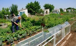 Les jardins ouvriers d'Allonnes, dans la Sarthe (illustration).