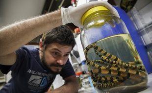 Le biologiste Rafael de Fraga étudie les serpents à Manaus.