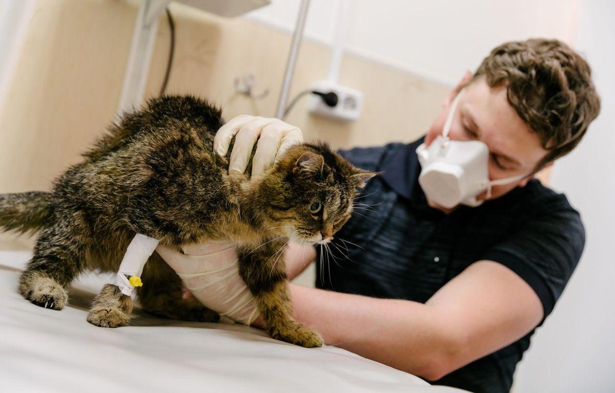 Coronavirus : Au Royaume-Uni, un premier cas de chat testé positif au Covid-19