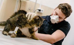 Un chat chez le vétérinaire pendant la crise du coronavirus (illustration).