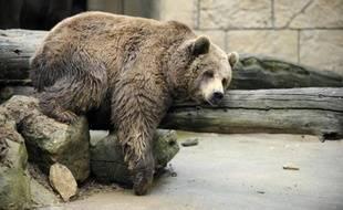 L'ourse Viviane est restée introuvable mercredi dans la zone de lagunes de l'Aude où elle est recherchée, quatre jours après s'être échappée de la réserve africaine de Sigean, a-t-on appris auprès de la préfecture.