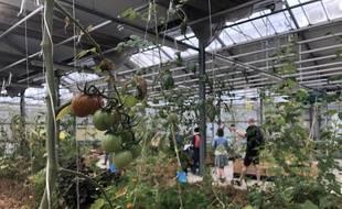 L'Agronaute, première ferme urbaine nantaise, a ouvert ses portes en septembre 2019
