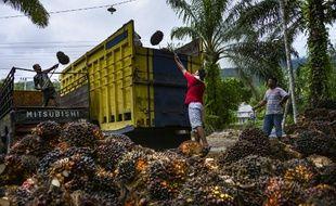 Des ouvriers chargent les fruits de palmiers à huile dans un camion, dans une plantation de la province d'Aceh, en Indonésie.