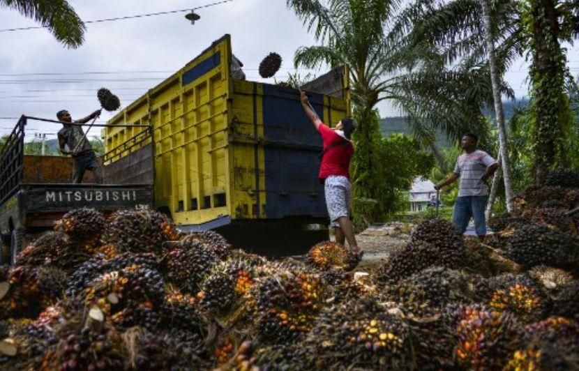 Agrocarburants : Les PFAD, le nouvel imbroglio du dossier « huile de palme » ?
