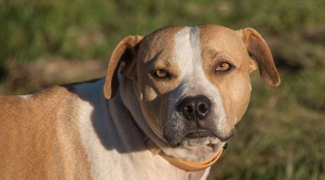 Dieppe : Son chien mord violemment et tue le chat de son voisin, le propriétaire condamné