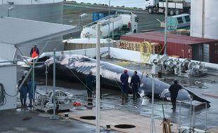 L'animal fait la taille d'un bus, selon les associations de défense des baleines.