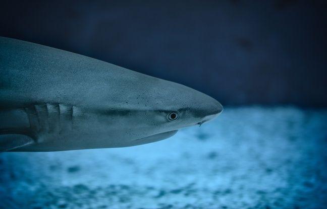 Australie: Un surfeur repousse l'attaque d'un requin grâce à sa planche Nouvel Ordre Mondial, Nouvel Ordre Mondial Actualit�, Nouvel Ordre Mondial illuminati