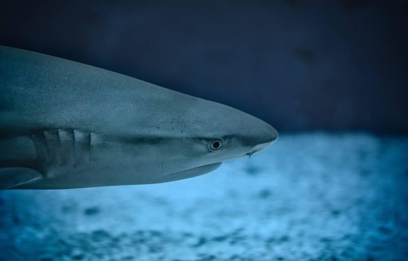 Floride: Il aperçoit un requin grâce à son drone et sauve sa famille in extremis