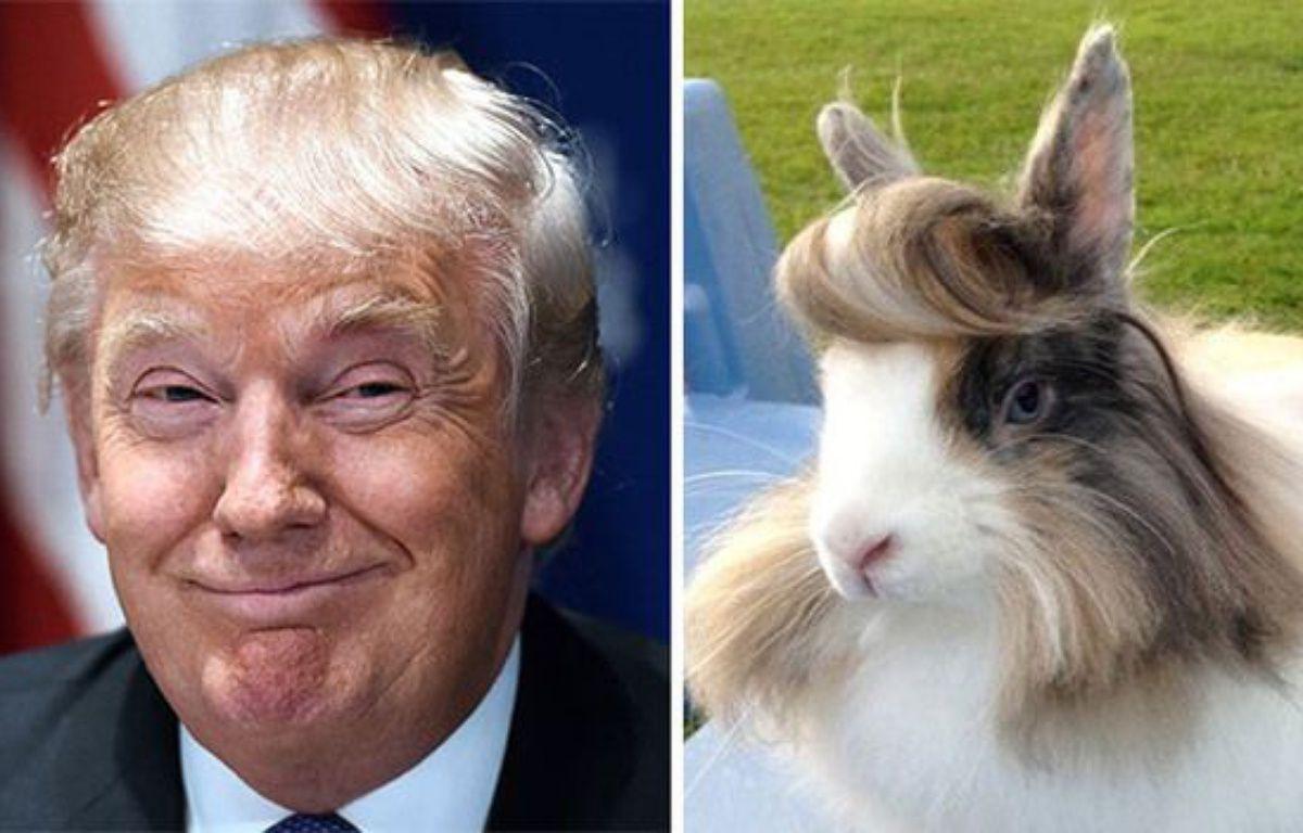 Donald Trump / un lapin –