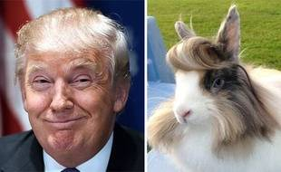 Donald Trump / un lapin