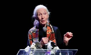 La primatologue Jane Goodall