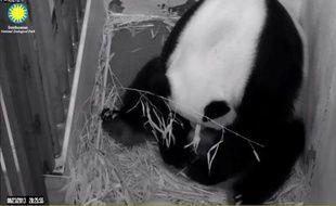 """Le bébé de l'espèce des pandas géants, né fin août au zoo national de Washington, a été baptisé Bao Bao, ce qui veut dire en chinois """"Trésor"""" ou """"Précieux"""", et sera montré aux visiteurs à partir de début janvier, annoncé dimanche le zoo."""