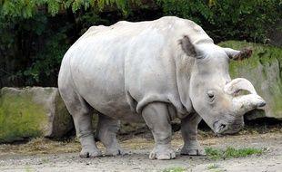 Un des quatre derniers Rhinocéros blancs du Nord encore vivants, sous-espèce en danger critique d'extinction, est mort ce 22 novembre 2015 au zoo de San Diego, en Californie (Etats-Unis).