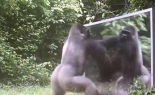 Capture d'écran d'une vidéo de Xavier Hubert Brierre tournée au Gabon.