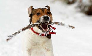Un chien jouant avec un bâton.