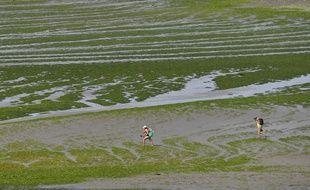 Envahie par les algues vertes au début de l'été, la plage de la Grandville à Hillion est de nouveau accessible au public.