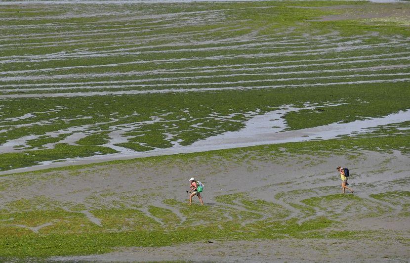 Bretagne : Fermée depuis juin en raison des algues vertes, une plage rouverte au public