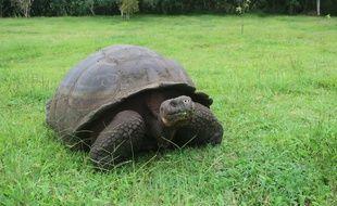Une tortue dans les îles Galapagos en Equateur, le 10 mars 2021.