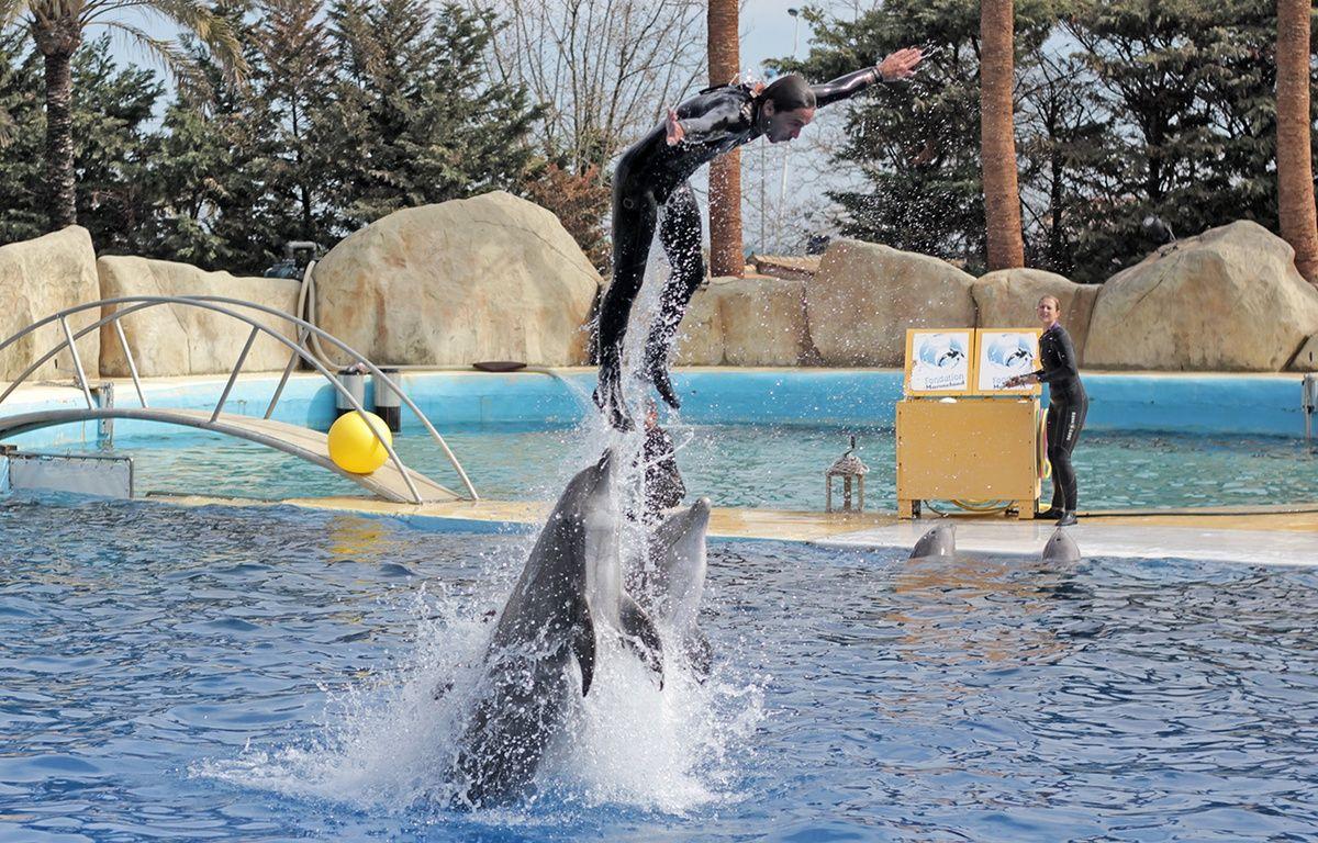 """Durant un nouveau spectacle avec les dauphins, alors que Marineland promet """"moins de performances avec les soigneurs"""" – F. Binacchi / ANP / 20 Minutes"""