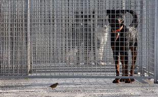 Des chiens pris en charge par la SPA de Gennevilliers