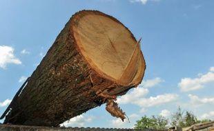 Le chêne devait être débité (illustration)