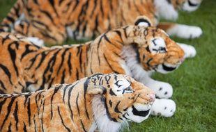 Tigres en peluches. Image d'illustration.