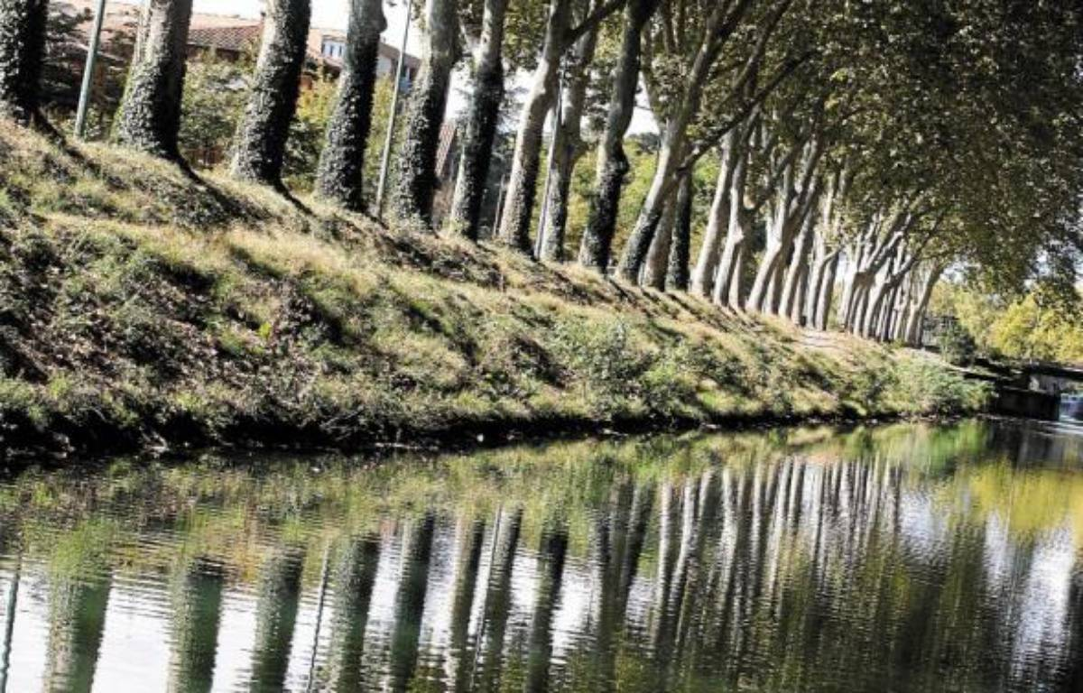 Alain Chatilllon préconise l'abattage de 4000 arbres chaque année. –  F. Scheiber/20 minutes
