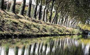 Alain Chatilllon préconise l'abattage de 4000 arbres chaque année.