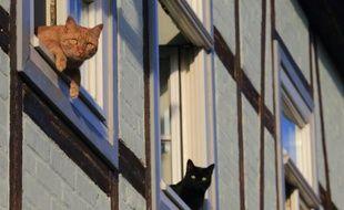 Deux chats à la fenêtre, le 5 août 2015 à Quedlinbourg, en Allemagne