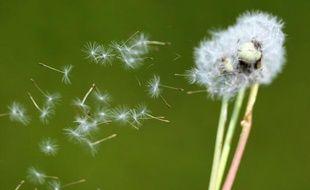 Les risques d'allergies aux pollens augmentent avec le retour de températures estivales (illustration).