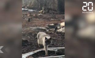 Une famille retrouve son chat un mois après l'incendie qui a ravagé Paradise.
