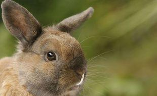 Les 6.000 lapins de l'élevage n'ont pas survécu (illustration)