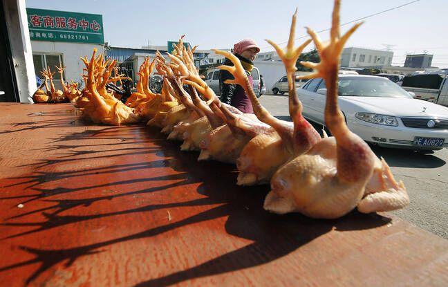 648x415 des poulets sur un marche en chine illustration