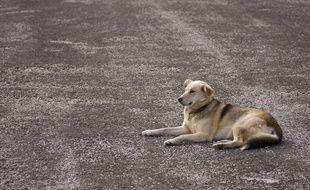 Illustration d'un chien dans la rue.