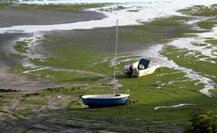 Illustration d'algues vertes sur une plage bretonne.