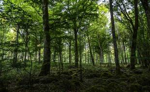 Le parc national de forêts, aux confins de la Champagne et de la Bourgogne, dernier né des parcs nationaux français. Il a été créé en novembre 2019.