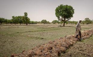 Boulsa le 09 juin 2012. Mise en oeuvre par l'ONG francaise SOS Sahel de solutions durables en matiere d'agriculture et d'acces a l'eau face aux secheresses recurrentes et a la desertification qui engendrent crises humanitaires et alimentaires au Sahel.